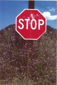 stop knapweed